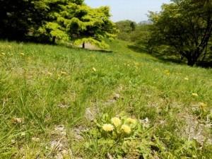 長沼公園2